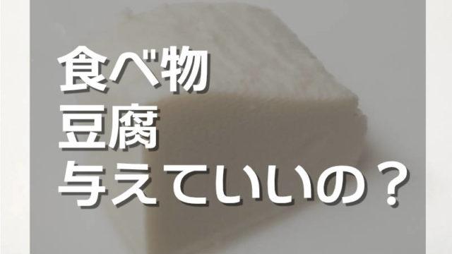 ハムスターは絹ごし豆腐や木綿豆腐を食べられるか